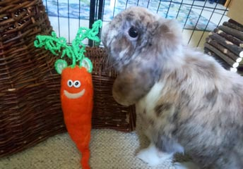 Kaninchen mümmelt an Ohrrübe